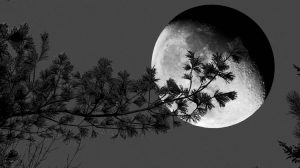 Moon Songs: two poems by Matthew Woodman