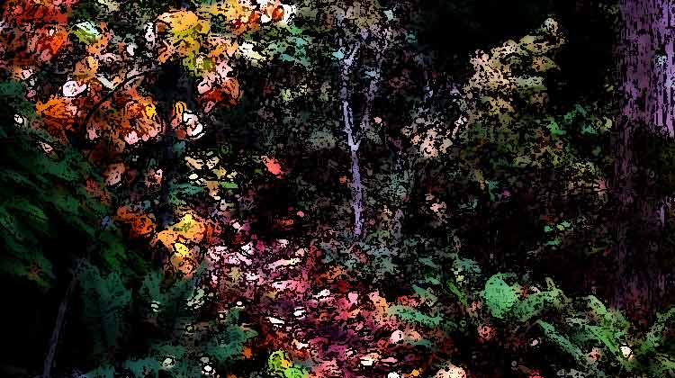 arbor trail / credit: em