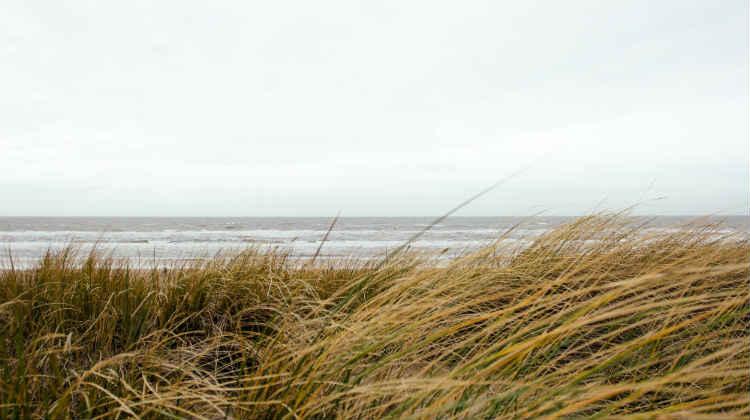 beach by alex talmon