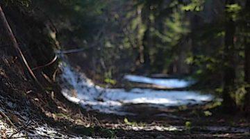 Mystery Forest - Denise Enck