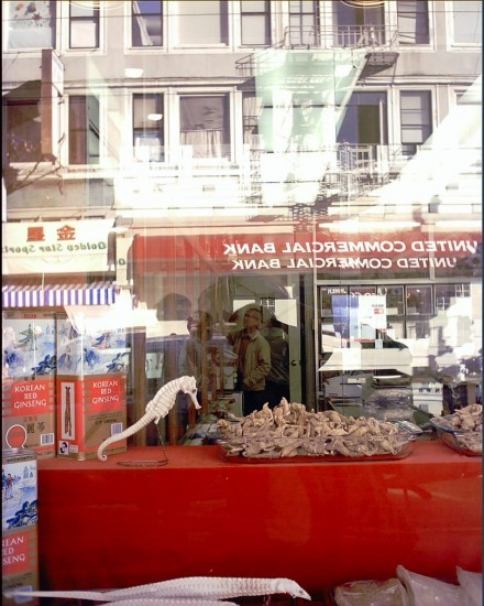 Shop Window in Chinatown with Seahorse  -- Tisa Walden