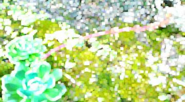 succulent / credit: de