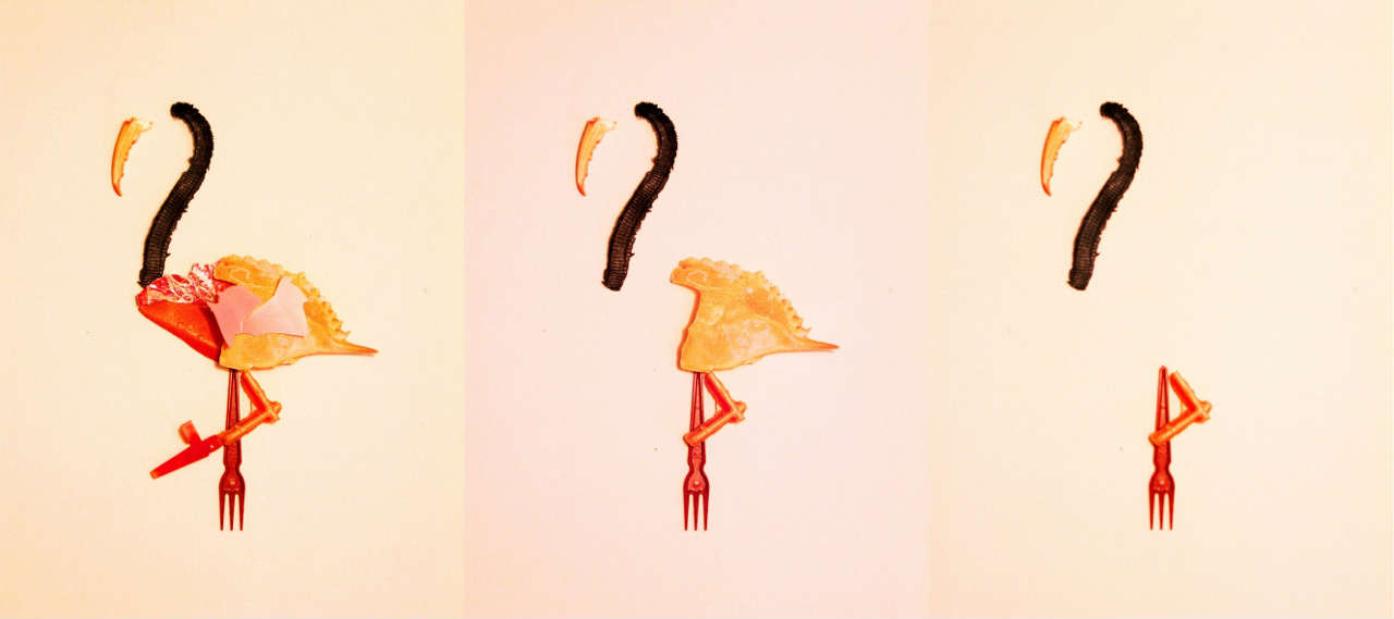 Essence of a flamingo - Elza Zijlstra