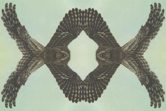 With Eyes Skittish As Shorebirds - Bill Wolak collage