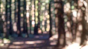 berthusen trail -- denise enck