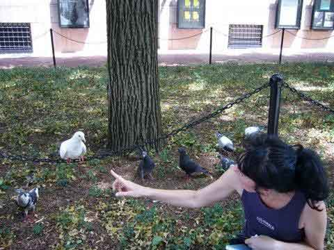 alison with the doves
