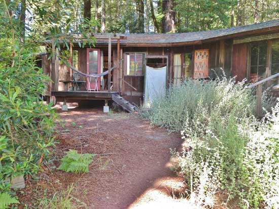 A view of ruth weiss' home in the redwoods. Photo by Horst Spandler.