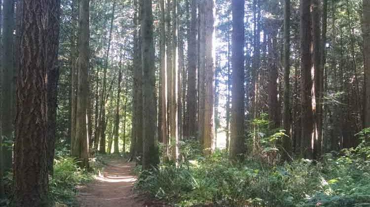 forest path / credit: de