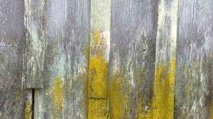pier artifact / credit: d.enck