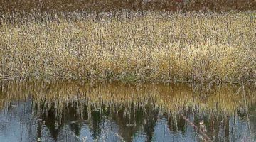 scudder pond, december / d.enck