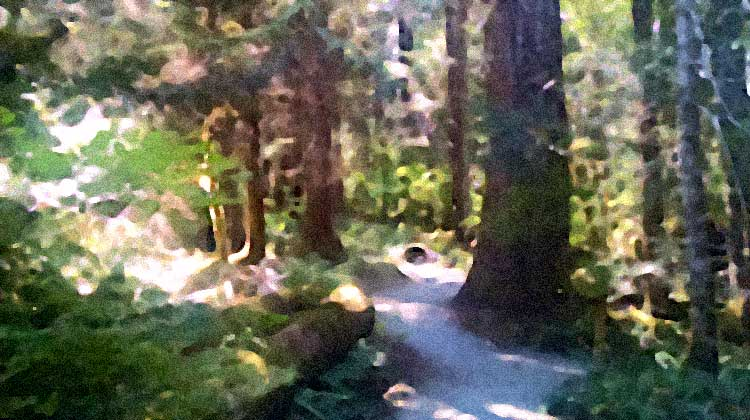 trail of the cedars / d.enck