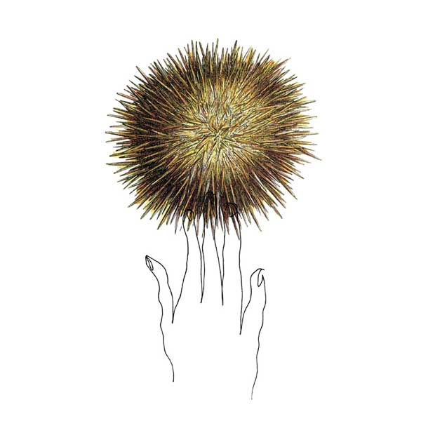sea urchin - collage drawing by Lori Langille