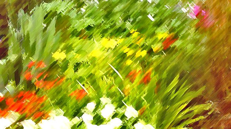 in the fragrance garden / credit: d.enck