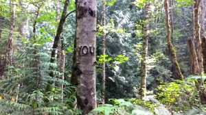 YOU in trees